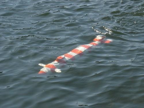 А вот и подводная лодка, которую чуть не потеряли :)