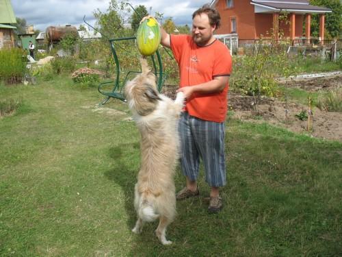 Все играют в регби. Я сделаю своего пса вторым Шалком Бургером.